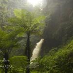 Isumo Waterfall - Nyungwe NP