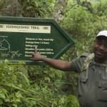 Nyungwe National Park - Igishigishigi trail