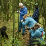 Photographing gorillas - Volcanoes National Park